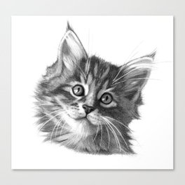 Maine Coon kitten G114 Canvas Print