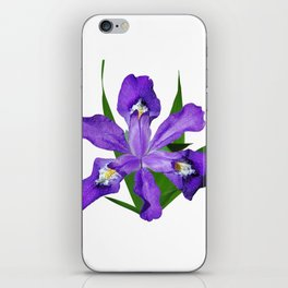 Dwarf crested Iris, Iris cristata on white iPhone Skin