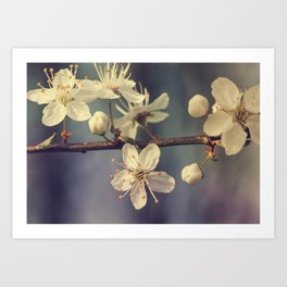 Cherry blossom tree in the blue Art Print