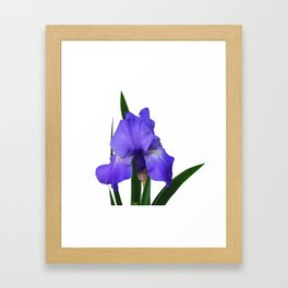 Iris 'Sea Master' Framed Art Print