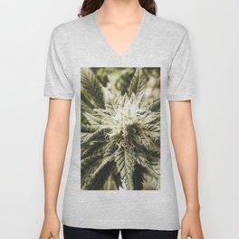 Organic Cannabis Sativa close up photo Unisex V-Neck