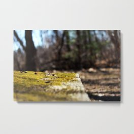 Nature's Mossy Bench Metal Print