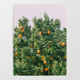 Oranges for Days Poster