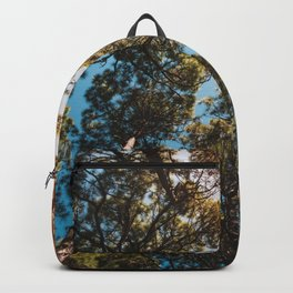 Trees and sky in sunlight- forest landscape - nature photography Backpack