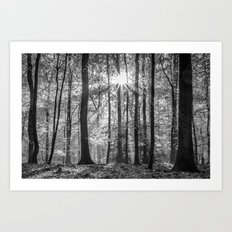 Beech Wood Sunrise Art Print
