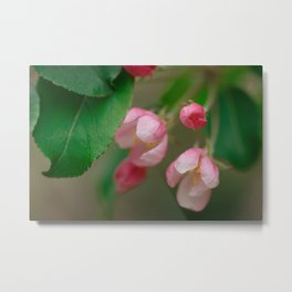 Apple Tree Blossoms Art Series Metal Print