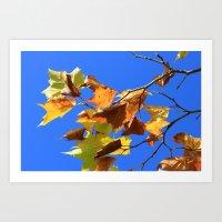 Fall Leaves on Blue Art Print