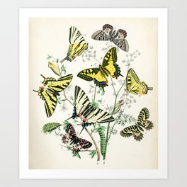Swallowtail and Apollo butterflies from Schmetterlings buch, 1883 Art Print