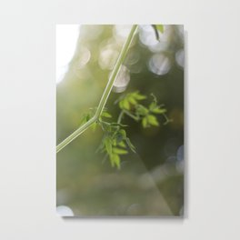Trailing Metal Print