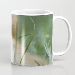 Muscovy duck's duckling on grass Coffee Mug