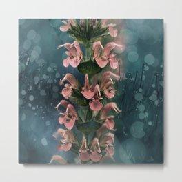 Soft Peach colored Salvia flowers Metal Print