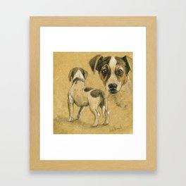 Jack Russel terrier SK080 Framed Art Print