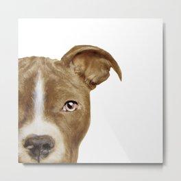 Pit bull brown_original painting print by Miart Metal Print