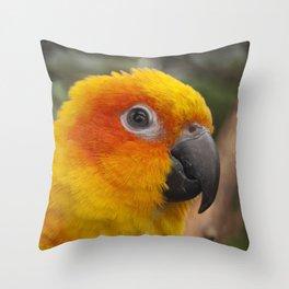 Sun conure parrot Throw Pillow
