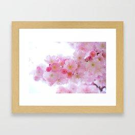 Closeup of a Blossoming Japanese Cherry Tree Framed Art Print