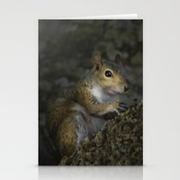 squirrel Stationery Cards featuring Squirrel by Judith Lee Folde Photography & Art