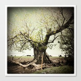 Split Tree, Flint Hills, Kansas Canvas Print