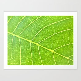 Leaf Detail Art Print