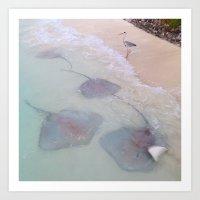 Maldives bird waves sting rays Art Print