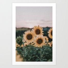 sunflowers / sunset Art Print