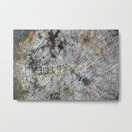 Old Tree Rings Metal Print