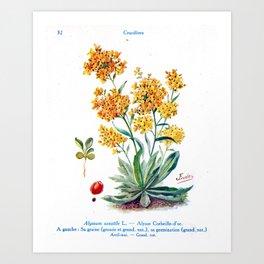 J Eudes - Alysse - vintage botanical print Art Print