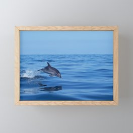 Spotted dolphin jumping in the Atlantic ocean Framed Mini Art Print
