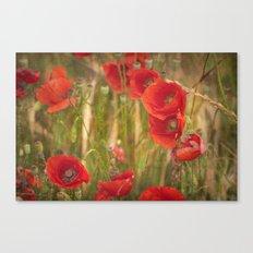 Poppies...... Canvas Print