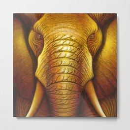 Elephant 01 Metal Print