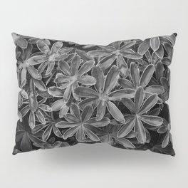 Starry Organics Pillow Sham