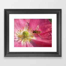 flower fly macro VII Framed Art Print