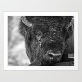 Buffalo Snot Art Print