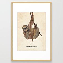 Three Toed Sloth February 2014 Print #1 Framed Art Print