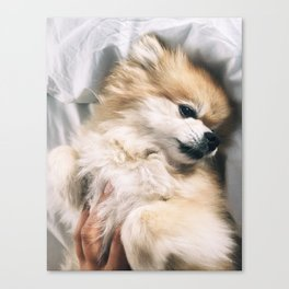 Love and Fur Canvas Print