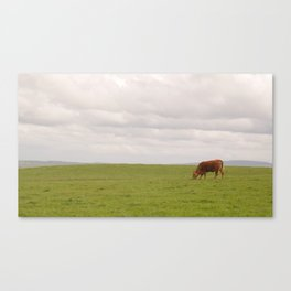 Cliffs of Moher: cow Canvas Print