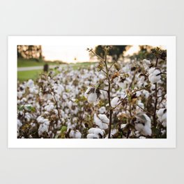 Cotton Field 3 Art Print