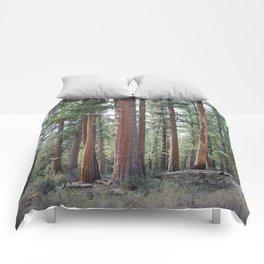 Ponderosa Pine Forest Comforters