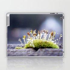 Maco photography Moss Water Drop Rain drops dew Green nature photography Laptop & iPad Skin