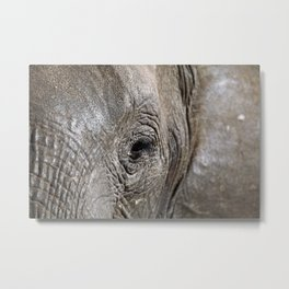 Eye of the elephant, Africa wildlife Metal Print