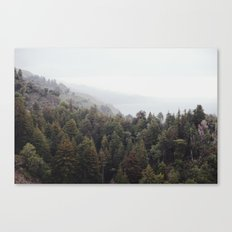forest for all the trees Canvas Print