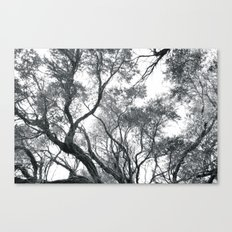 Wilsons Prom Canvas Print