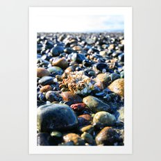 Lonley Barnacle Art Print