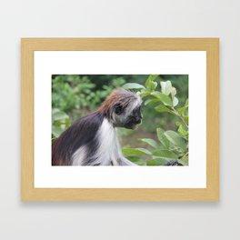 Pensive Colobus Framed Art Print