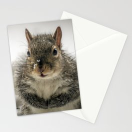 Adorable Praying Squirrel..Feed ME!! Stationery Cards