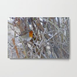 Robin in Winter | Rotkehlchen im Winter Metal Print
