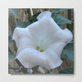 White wild flower in Zions Metal Print