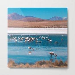 Flamingos in Bolivian beach Metal Print