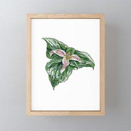 Trillium Framed Mini Art Print
