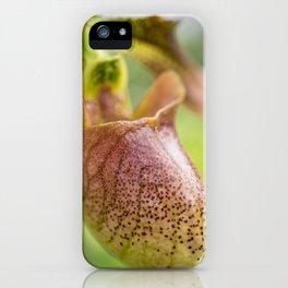 Lady Slipper Orchid II, Paphiopedilum iPhone Case
