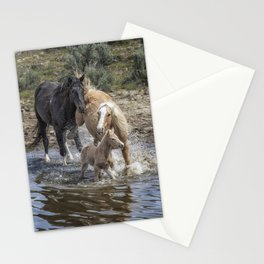 Fending Off Another Mustang to Protect Her Foal Stationery Cards